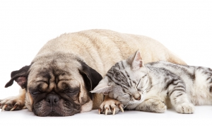 cat_dogpic_SMALL